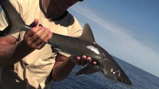 Download Video Fishing in New Cal by TH MP3 3GP MP4