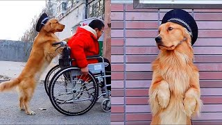 Smart Dog TIK TOK Funny | Happiness is helping others