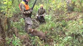 Sussex Spaniel Hunting Grouse and Woodcock
