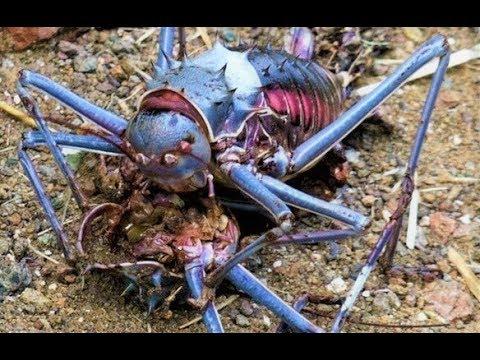 STRANGEST Creatures Found in Africa