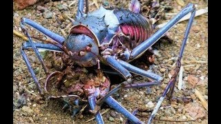STRANGEST Creatures Found in Africa