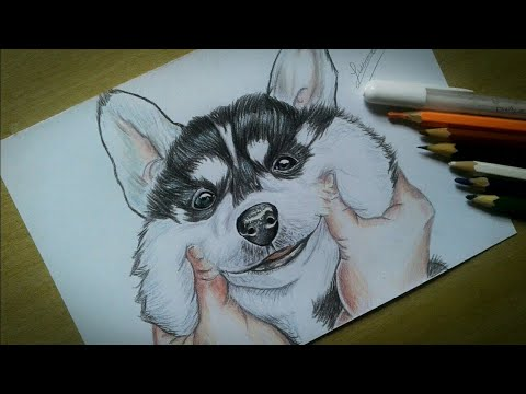 Como Desenhar Um Cachorro Tumblr