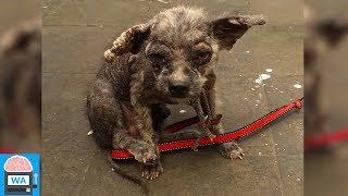 Tierarzt sagt, dass der Hund keine Chance mehr hätte, doch eine Frau wollte ihn nicht aufgeben