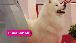 World Dog Show 2013 - Group V Judging