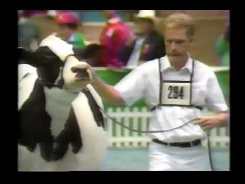 1989 World Dairy Expo Holstein Show