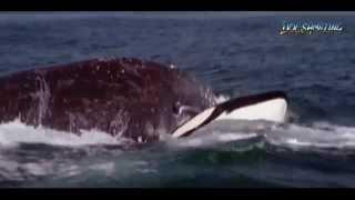 I Predator: Killer Whale (COMPLETE) [HD]