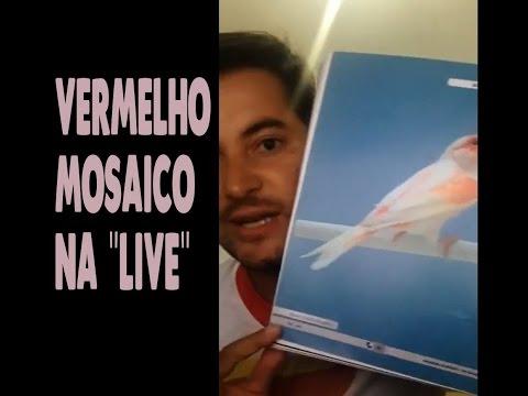 """Samuel Valentim - VERMELHO MOSAICO (""""live"""")!"""