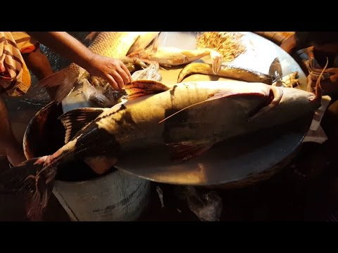Huge Fish Market & Fish Cutting Section | Lot Of Fish Available