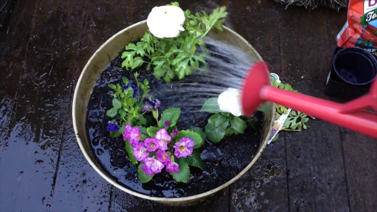 Planting Flower Pots For Spring Anoregoncottage Com Youtube