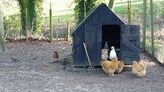 Small Chicken Coop Plans Tips