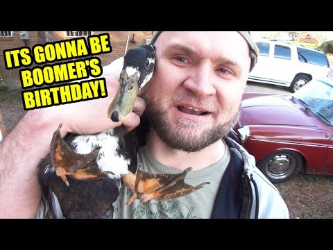 Eleanore's Engine - Boomer's Birthday! - Mid Day Q&A - 34