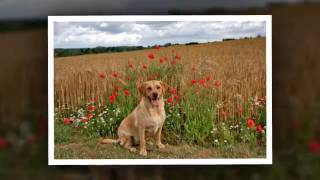 Dog Trainers - Wakes Colne Training Kennels