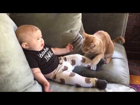 Я ржал в течение часа 😾 Самые сумасшедшие кошки раздражают детей     Смешные видео о кошках 2020