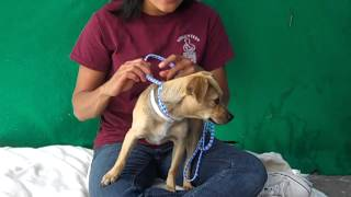 Lindsey A4566761  Rescued!!!