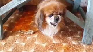 Посвящается памяти моей собаки