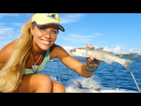The SECRET Revealed! How To Catch BAIT FISH & Micro Fish Video!