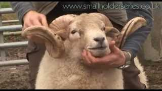 "Doing a Ram ""MOT"" with Adam Henson"