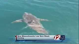 9-year-old jumpstarts Mass. shark finning law