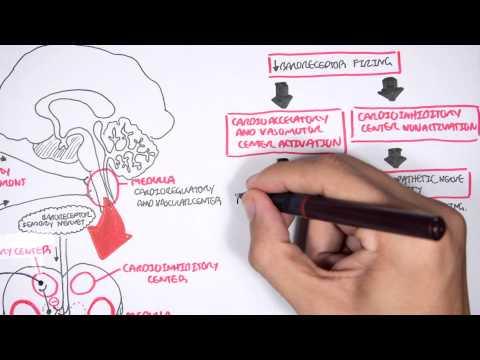 Compensatory Mechanisms of (Medical) Shock