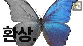 이 나비의 날개에는 파란색 물질이 들어있지 않습니다.
