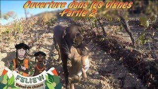 Ouverture de la chasse dans les vignes, chasse au faisan, perdreau lièvre et palombe partie 2 ...