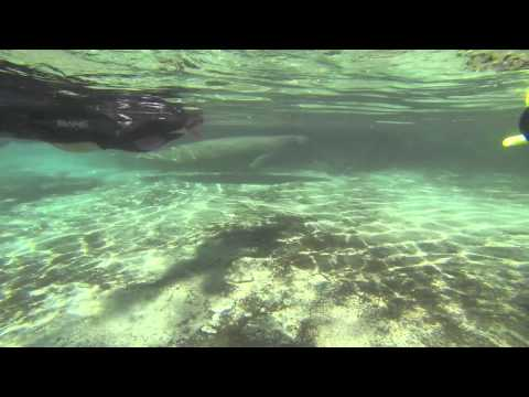Swim With The Manatees At The Plantation On Crystal River