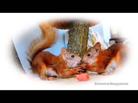 Белочки - хулиганки 🐾🐾🐾 Squirrels - Hooligans