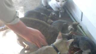 Tha whole gang of kittens/cats