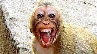 Little monkey terrified by big monkey | Little monkey cries till stool out