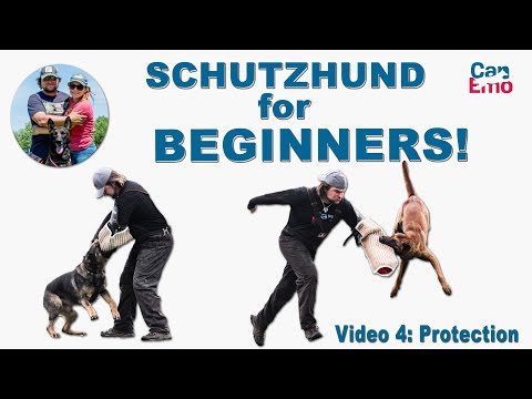 Schutzhund For Beginners: Protection!