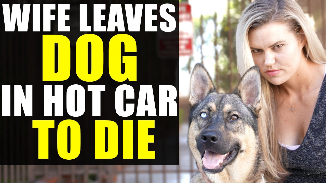 Download EVIL WIFE Leaves DOG In HOT CAR to DIE!!!!! You Won't BELIEVE What the HUSBAND DOES NEXT!!!!!