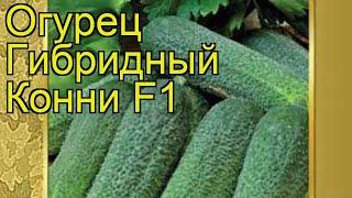 Огурец гибридный Конни f1. Краткий обзор, описание характеристик, где купить семена