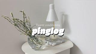 꽃 열탕처리 집에서 쉽게 컨디셔닝 하는방법 & …