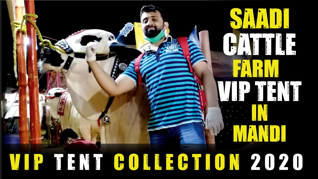 SAADI CATTLE FARM | COW MANDI SOHRAB GOTH 2020 KARACHI | VIP Tents | HEAVIEST BULLS BEAUTIES