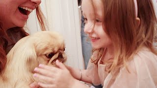 3 Year Old Reunites with Her Puppy After 6 Months Apart | Birthday Surprise!