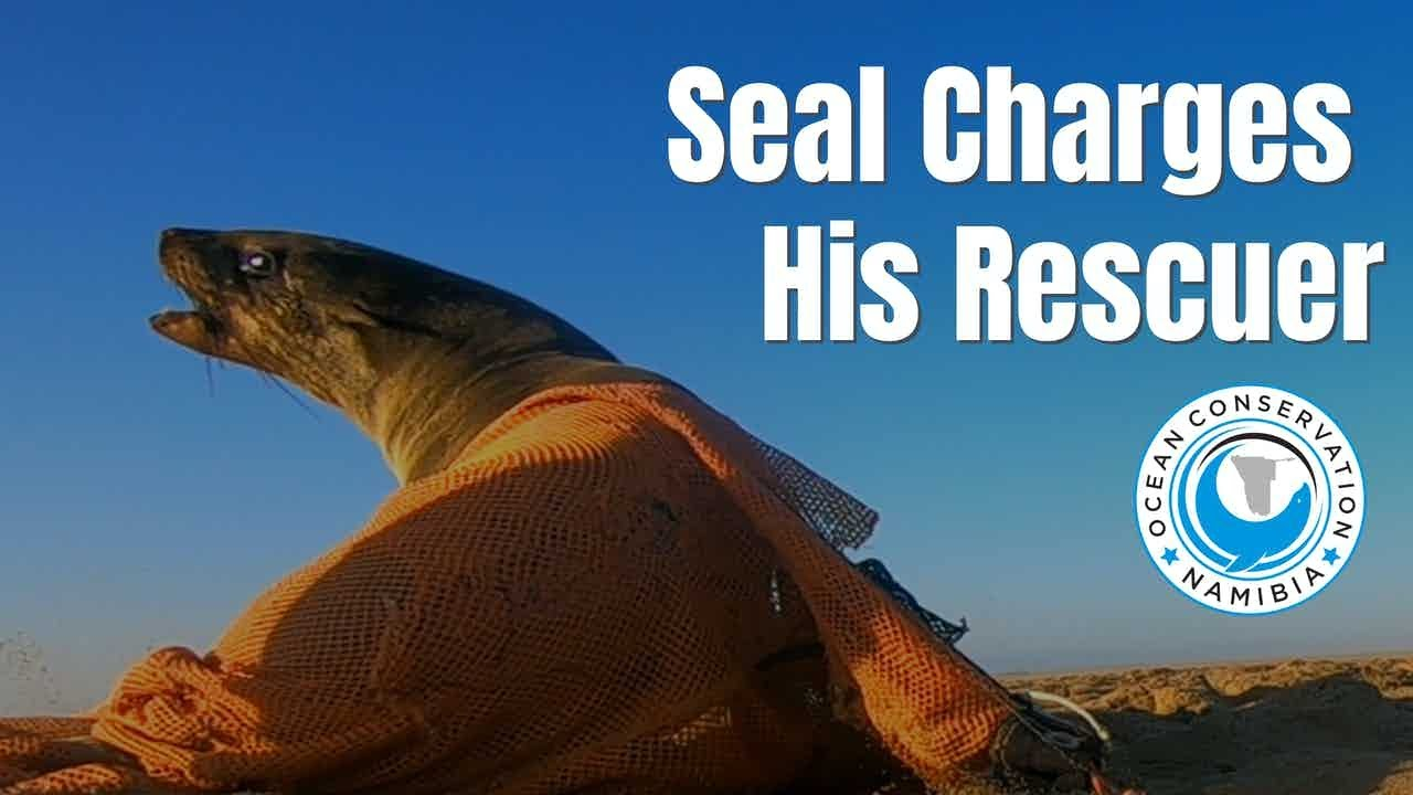 Seal CHARGES His Rescuer