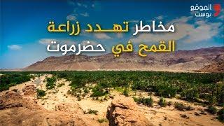 شاهد فيديو عن تأثير انعدام المحروقات على القمح في وادي حضرموت