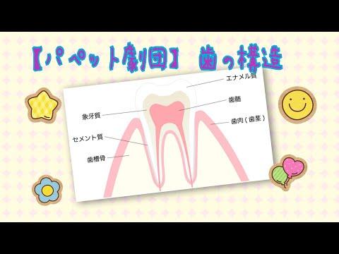 【パペット劇団】歯の構造について