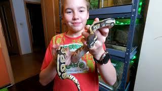 Oto wszystkie moje piękne węże 😊😊😊