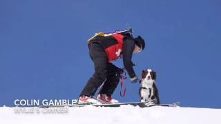 Watch an Avalanche Rescue Dog Perform