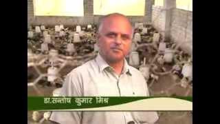 Murgi Palan (Doordarshan Kendra Varanasi (DDK Vns)