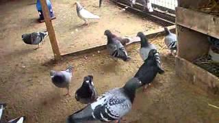Gołębie - PAMIĘĆ OFIAROM KATASTROFY !!