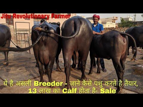 युवा-Breeder बन कर भी कमा सकते है - लाखों और नाम. Devender Coach Sahab की तरह.
