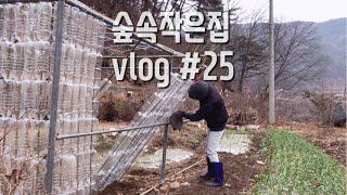 숲속작은집 vlog 25 페트병 재활용 창고 만들기, 동지팥죽 끓이기, 건강검진 받는 브이로그