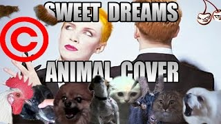 Baixar Eurythmics - Sweet Dreams (Animal Cover) [REUPLOAD]