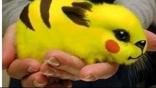Pokemon GO - МАГИЧЕСКИЙ ТРЮК В ЛЕСУ!