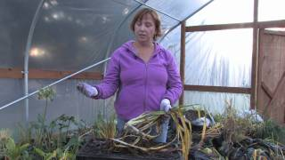 Plant Care & Gardening : How to Prune Daylilies