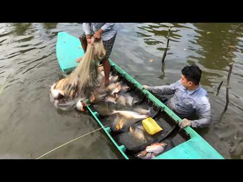download unbelievable cast net fishing river monsters giant pacu