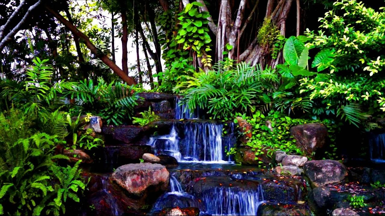 nature sounds rain forest with waterfall and exotic bird sounds