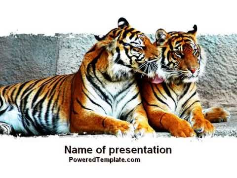 Tigers PowerPoint Template By PoweredTemplate.com